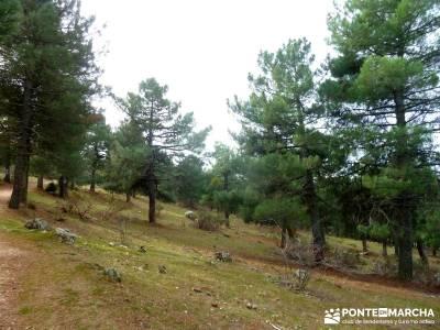 Pinares, Riscos y Atalayas; excursiones en madrid y alrededores; viajes activos